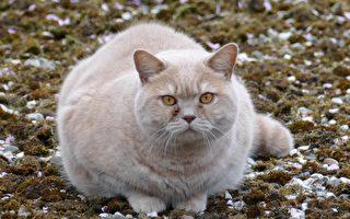 """拒绝肥猫抢食主人出奇招 在家开""""一兰""""猫食堂引领风潮"""