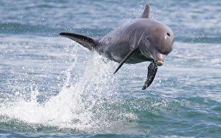 海豚也有阿兹海默症?科学家揭失智一大原因