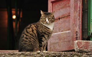 夜晚猫咪求主人再遛它一次 门一开主人追它而去随即惊呆