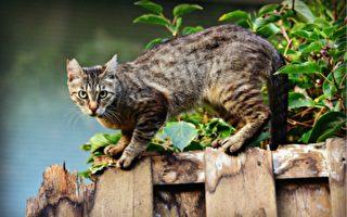 为什么猫咪会被剪耳?TNR又是什么?