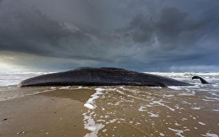 鯨魚趴在海灘上一動不動 下面發生的事令人感動心酸