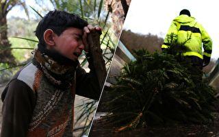 少年雪夜買聖誕樹被母責罵 數十年後母親的道歉讓他後悔