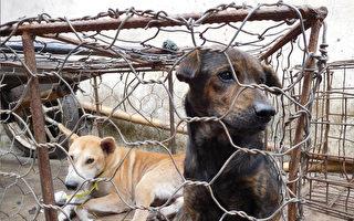 猫狗遭大屠杀 印尼动物市场被形容为地狱
