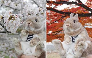 史上最萌「京都御用模特」帶你賞四季美景 看完只想移民