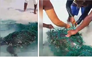 海龜們身陷漁網在岸邊掙扎 好心人協助脫困讓人好感動