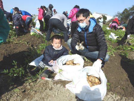 「馬鈴薯隨你挖」的活動很有趣,許多民眾帶著一家大小來挖馬鈴薯,挖出的馬鈴薯又大又多,人人都滿載而歸。