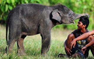 受困小象走不動 男子冒險扛牠送回母象身邊