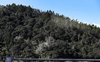 外國人採伐森林受限?紐植樹計劃或受阻