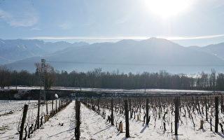 組圖:法國阿爾卑斯冬季風情 雪之美