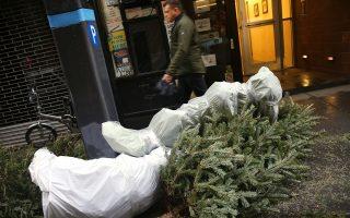 回收圣诞树再利用