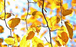 新诗:秋天的华尔滋