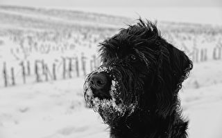 凌晨4點一對捲毛非要出門玩雪 門外景象讓主人立馬報警
