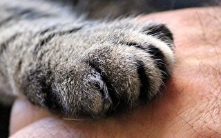 曾被5家庭退回 「世界最淘氣貓」落戶紐約 IG吸粉7萬