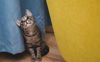 宝宝和猫咪每天晨间对话 超可爱场面乐翻爸爸