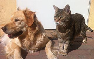 他让狗狗们卧下并翻身 旁边猫咪的反应让人笑喷
