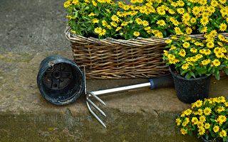 庭院:仲夏一月的花