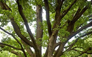 热门英国心理测试:大树上21个位置 你选哪?