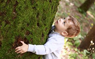 男孩与大树的故事 看完这故事后 心一直都酸酸的