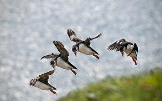 多伦多群岛成候鸟栖息地 被吁定为鸟类保护区