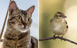 好奇貓咪瞪著小鸚鵡 伸出貓爪幹了件讓人大跌眼鏡的事