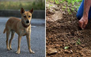 泰国狗狗埋东西 其后原因令人心碎