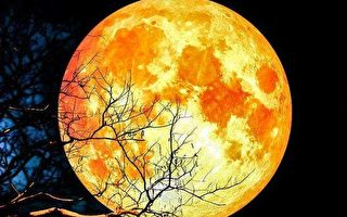 朴厚:观超级蓝血月