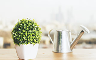 六種室內植物 淨化空氣又紓壓