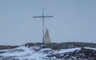 """北极熊和逃跑的猪在""""祈祷""""?"""