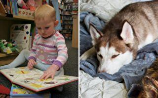 宝宝看到书上有只狗 连忙叫醒身边的大狗一起看