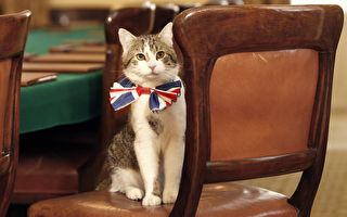 英人氣捕鼠大臣領薪不辦事 賣萌表示:當官好難⋯⋯