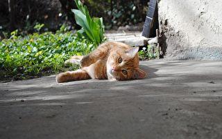 愛貓走失2年半奇蹟找回 重逢時貓咪一反應讓主人淚流不止