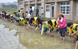 營養師與馬鳴學童插秧 食米栽種親體驗