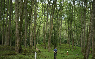 「點木成金」 華裔科學家研發「超級木材」