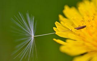 呼兰胖子:新春献词:某些灵魂就是一粒种子