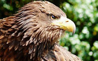 男子河邊撿到一隻罕見大鳥 專家鑑定後的結果讓人吃驚