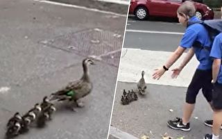 路遇鸭妈妈拖家带口过马路 孩子们这样做让警察赞