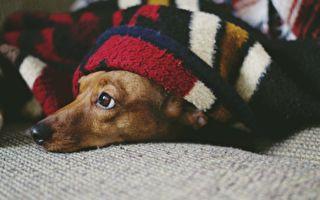 贴心男友送来可爱小狗 它身上藏着超大惊喜