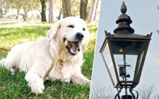 点亮路灯不用通电 能源竟然来自狗狗?英国这个发明超棒