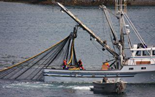 滿網的魚拉上船 沒想到裡面竟然滾出來一隻搞笑大怪獸