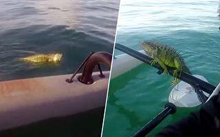 亚裔男子出海钓鱼 救上来的这只小动物 表现超可爱