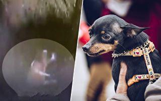 情人節奇蹟!狗狗逃過垃圾車粉碎刀片 獲救歷程超勵志