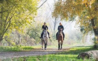 兩匹同樣健壯的駿馬 價格相差十倍 原因令人驚歎