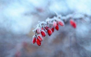 诗歌:雪后