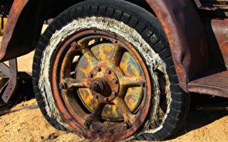 本以为轮胎上粘了蜂蜜 没想到切开后的一幕 人们都惊呆了