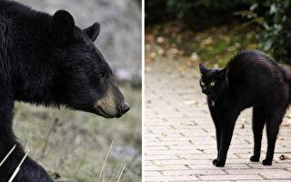 不在乎你的樣子 只要能和你在一起 熊和貓的溫馨故事