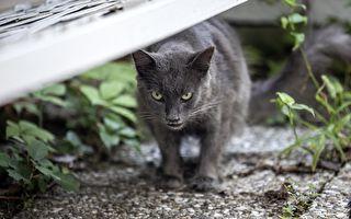 """小猫咪玩伴突""""变脸""""可怜狗狗被吓成这样"""