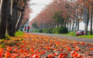 雲林最美麗縣道 納入前瞻計畫