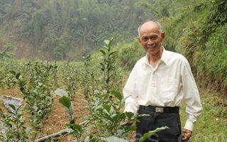 年少受恩思回馈 八旬翁种红茶助弱势