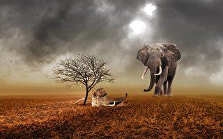 龐大身軀溫柔心 大象驚見鄰居象奶奶遺骸居然這麼做