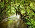一個BBC生態攝影師在樹梢上的探險筆記(2)